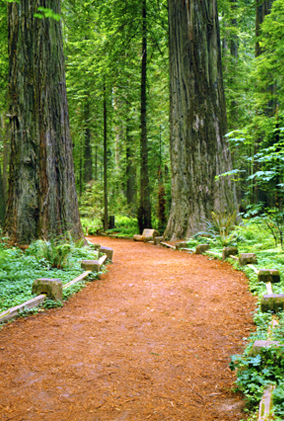 pathway through a wooded area